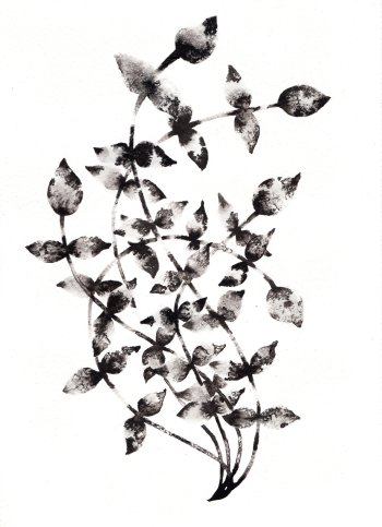 https://www.artfinder.com/artist/noumedacarbone/